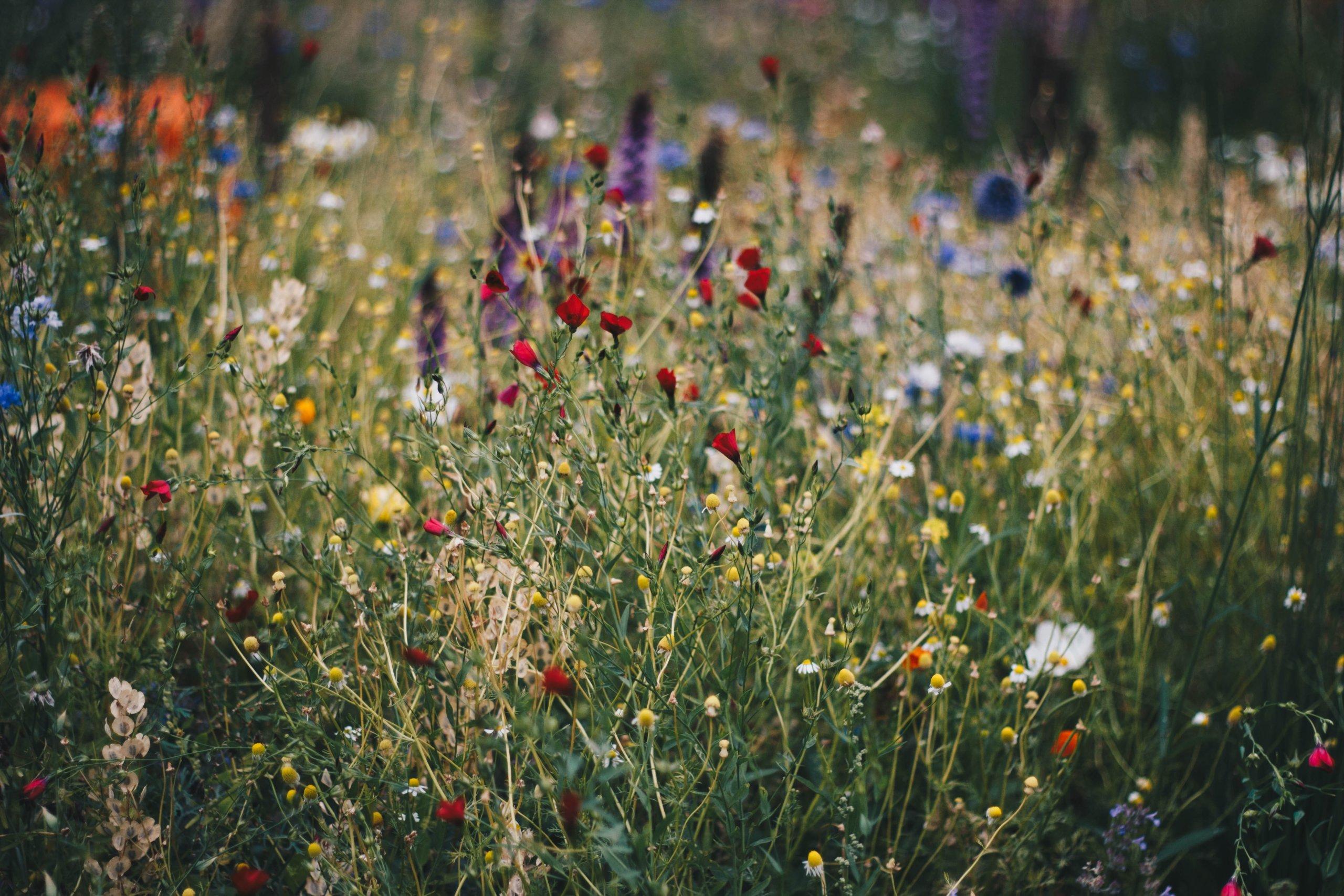 Wildflower Keepsakes